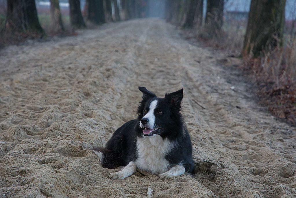 Senka in het zand